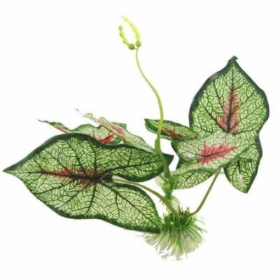 Διακοσμητικό φυτό ενυδρείου πλατύφυλλο ρεαλιστικό φύλλωμα  20cm - Caladiifolia Y2M1