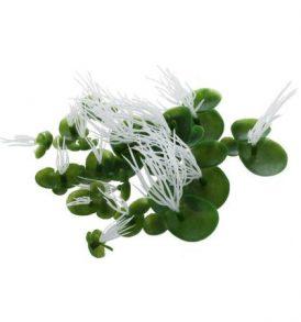 Διακοσμητικό φυτό ενυδρείου επιφανείας σετ με 18 διάφορα μεγέθη  - Lemna LM18C