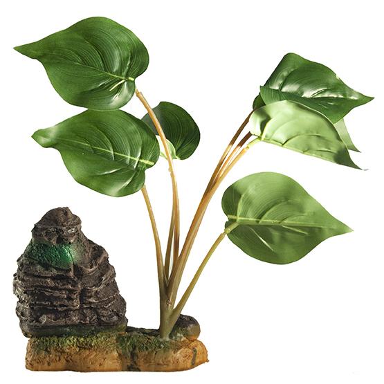 Διακοσμητικό πλατύφυλλο φυτό ενυδρείου και Terrarium 26cm με βράχο - AR2526  MONWA