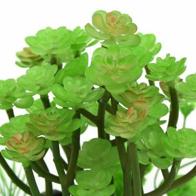 Διακοσμητικό πλατύφυλλο φυτό ενυδρείου και Terrarium 10Χ13cm πάνω σε πέτρα - YW190  MONWA